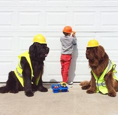 Ain't no way they will ever want to be apart from you, so keep taking good care of your Newfy. He will never let you down. See why at http://boredomkicker.com