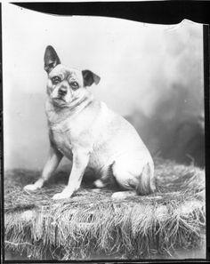 File:Lop-eared dog n.d. (3192598908).jpg