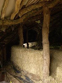 Build straw bale wall inside, a fun and quick job. The bales are stacked on rough dry stone wall and staked together with hazel sticks. Inside bales go on pallette floor ready for floorboards on top