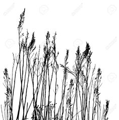 4458955-real-grass-silhouette-vector-Stock-Vector.jpg (1283×1300)
