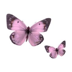 VC_HippoInBloom_El29.png ❤ liked on Polyvore featuring butterflies, backgrounds, fillers, animals, pink and effect