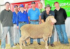TOP SPEND: Leahcim's Alistair Michael holds the $38,000 top-price ram with Chad Burbidge (left), Murray Bridge, and Gary Ferguson (right) Tintinara representing the successful Superior Wool Syndicate buyers. Also pictured are Jed and Hugo Keller, Ramsgate stud, Tintinara; Elders auctioneer Tom Penna; Ray Schroeder, Gunallo stud, Murrayville, and Landmark auctioneer Gordon Wood.