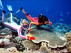 http://fathomoz.com/wp-content/uploads/2009/08/Lamont-Reef.jpg