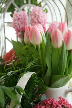 Aiken House & Gardens: My Indoor Spring Garden