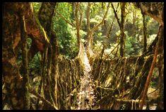 Meghalaya living roots bridges, India