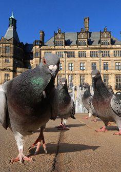 Pigeon Perspective, photo by Peter Matthews @dailydigitalphoto.com - Pixdaus