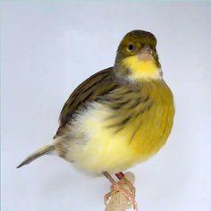 Beautiful Creatures, Birds, Animals, Friends, Photos, Animais, Animales, Animaux, Bird