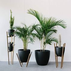 Get your Black Concrete Planters online now! www.foxandramona.com.au And how awesome are these planter stands by @medusametal...