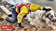 Mobile phone footage helped Kent Fire and Rescue Service save the life of a horse trapped in mud. Best Mobile Phone, Best Phone, Horse Rescue, Animal Rescue, Phone Service, Firefighter, Canada Goose Jackets, Mud, Horses