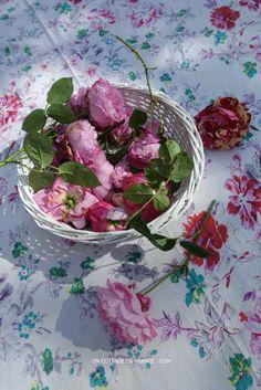 Roses de mai shabby chic, blog shabby chic rustique chic 1