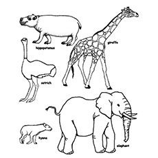 Top 25 Free Printable Wild Animals Coloring Pages Online Animal Sketches Drawing Pictures For Colouring Animal Drawings