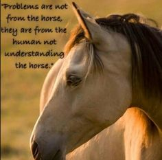 Horse Portrait by Angel Ciesniarska Funny Horses, Cute Horses, Horse Love, All The Pretty Horses, Beautiful Horses, Equine Quotes, Inspirational Horse Quotes, American Saddlebred, Horse Portrait