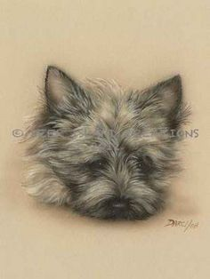 cairn terrier history - Google Search