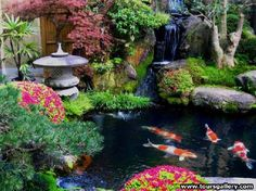 Koi Pond                                                                                                                                                                                 More