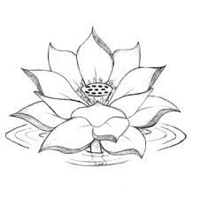 Pencil sketches lotus flower 1000 images about lotus flowers on image result for lotus flower mightylinksfo
