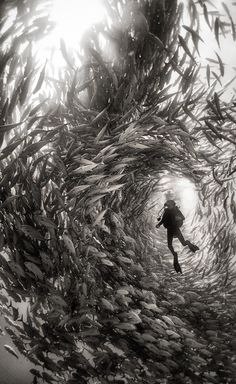 Alice Photo by Anuar Patjane — National Geographic Your Shot - Surrounded by a swarm of jack fish in Cabo Pulmo National Park, Mexico. Cabo Pulmo is the best example of a recovered reef in Mexican seas. Under The Water, Under The Sea, Fishing Photography, Underwater Photography, Nature Photography, Travel Photography, Film Photography, Street Photography, Landscape Photography