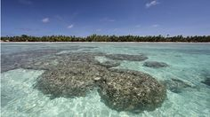 NEWS: Low-lying atoll nation has bought land in Fiji to relocate its 100,000 population as global warming impacts accelerate