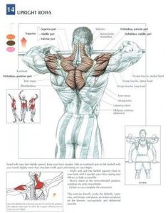 upright row anatomy