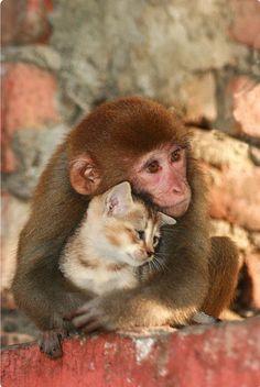 monkey hugging cat - Pesquisa Google