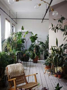 brooklyn loft with white painted floor and mauve wall and tropical houseplants