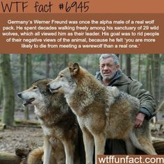 True wtf facts about wolves - 15 pics Wtf Fun Facts, Funny Facts, Funny Memes, Dog Facts, True Facts, Movie Facts, Random Facts, Funny Animals, Cute Animals