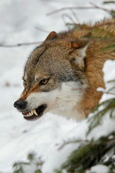"""""""Out of their borders!"""" Flame exclaimed, """"They said they were hunting wolves,"""" she snarled."""