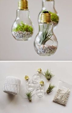Lightbulb Upcycling // terrarium
