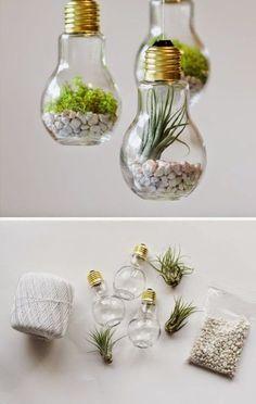 Lightbulb Upcycling // terrarium