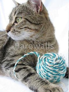 """""""Brown cat and ball"""" - Cat posters and prints available at Barewalls.com"""