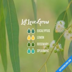 Let Love Grow - Essential Oil Diffuser Blend