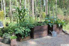 laatikko,kasvit,piha,istutus,kasvilaatikko
