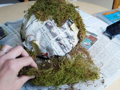 how to make moss ball urns