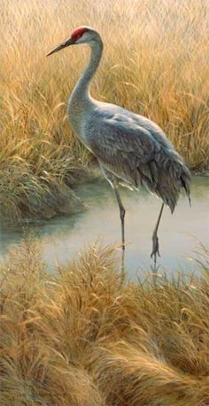 painting by Joni Johnson Godsy. I have taken dozens of photos of sandhill cranes and wanting to paint them. This inspires me.