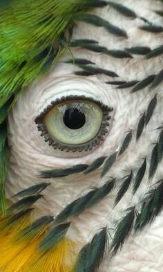 Close-up of a parrot's eye