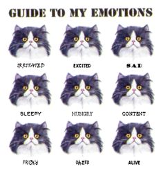 A guide for all of the confused cat owners
