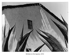 Manuel ALVAREZ BRAVO :: Window on the Agaves, 1976