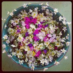 Wild Medicine Women Magical Wild Child Flower Salad c Melanie Eclare Photography