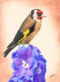 Goldfinch on a Delphinium Flower by Digital and Wildlife Artist Iain S Byrne