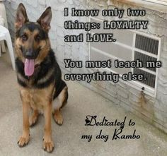 Thanks so much for sharing all about the relationship you have with your handsome German Shepherd Dog, Rambo. Description from total-german-shepherd.com. I searched for this on bing.com/images