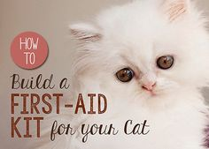 Chances are you've got a cabinet full of first aid supplies for the humans in your home in the event of an emergency. But, do you have a first aid kit for your cat, too? You could purchase a pre-made first...