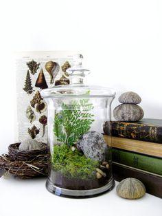Garden Terrarium Set: Miniature Moss Garden in Decorative Apothecary Jars Wedding Table Centerpiece. $175.00, via Etsy.