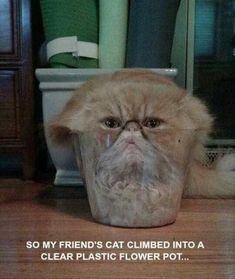 IM WHEEZING #CatFace