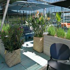 Notre terrasse est en place, prête à vous inspirer ! Retrouvez un grand choix de meubles de qualité, mis en valeur grâce aux plantes et fleurs de chez W-Création 🌳  🌺  Notre showroom est ouvert aujourd'hui jusqu'à 18h. Inspirer, Hui, Place, Showroom, Design, Open Set, Furniture, Terrace, Fashion Showroom