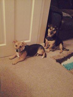 Rosie and Benji