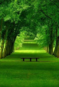 Bench on a green path. [ http://CandaceWilsonArtStudio.com ]