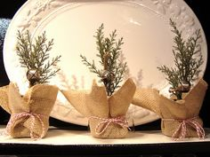 cute mini trees wrapped in burlap, candy cane string.