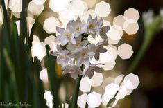 How to create bokeh and a photography resource to make ALL your photos better.