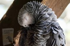 Budgies, Parrots, Parakeet Care, Parrot Image, Cages For Sale, African Grey Parrot, Victoria Falls, African Elephant, Pet Care