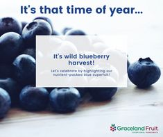 Looking for a way to heighten your snacking experience? Our infused dried wild blueberries are as nutritious as they are delicious. Our moist and chewy infused dried wild blueberries promise to deliver texture, sweetness, and color to a variety of applications. This small but mighty berry is nutrient packed and strengthens immunity, promotes cardiovascular health, and improves cognitive activity. What are you waiting for? Chat with our experts today about our popular infused dried blueberries. Cognitive Activities, Dried Blueberries, Cardiovascular Health, Lets Celebrate, Harvest, Blueberry, Waiting, Popular, Texture