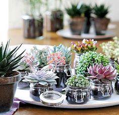 Cute succulents                                                                                                                                                      Más